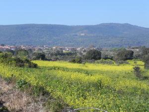 Memorandum 34. Il suolo di Sardegna che conserva intatti senso e significato è un bene comune che non può essere svenduto. Parliamone! [di Maria Antonietta Mongiu]