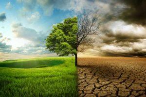 Cambiamenti climatici. Specie [di Giovanni De Mauro]