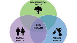 nuove-pandemie-zoonosi